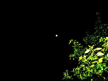 今日の月 (2).JPG