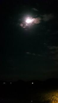 名月 (5).JPG