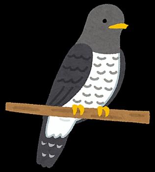 時鳥.png