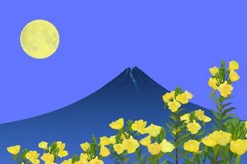 月見草.jpg