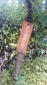 松尾芭蕉 (17).JPG