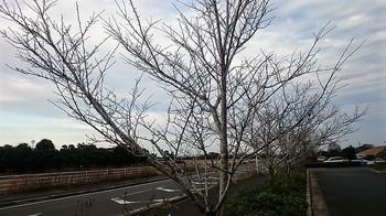 枯木道 (1).JPG