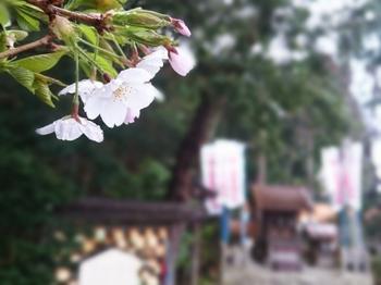 花の雨.jpg