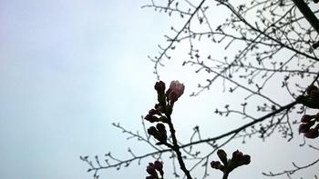 花の雨1.JPG