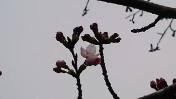 花の雨2.JPG