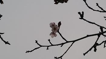 花の雨3.JPG