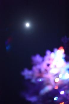冬の月 (3).JPG