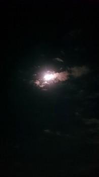 名月 (4).JPG