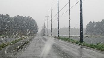 名残雪.JPG