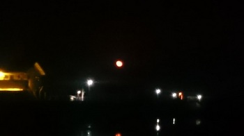 春の月 (2).JPG