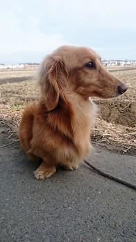 犬.JPG